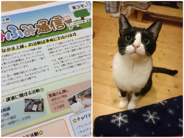 猫好きさんに「しっぽのなかま上越」さんの会報誌置いてます